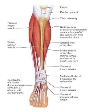 shine splints